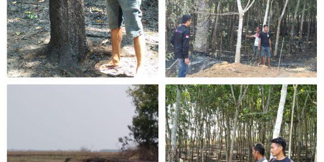 Diduga Api dari Lahan PT. Budi Darma Godam Perkasa Kabupaten Lampura Kebun Warga Terbakar