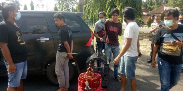 Sindikat Pencuri Burung Murai Batu di Ringkus Tekab 308 Polres Lampung Utara